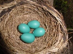 An egg a day