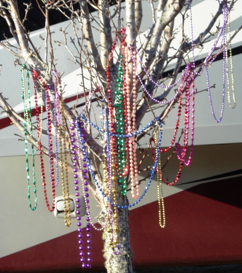 Soon the beads will sparkle between green leaves and white lilac like flowers of Myrtle!